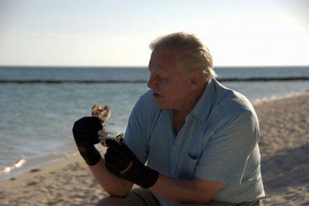 Жизнь на земле фильм дэвида аттенборо смотреть фото 356-803